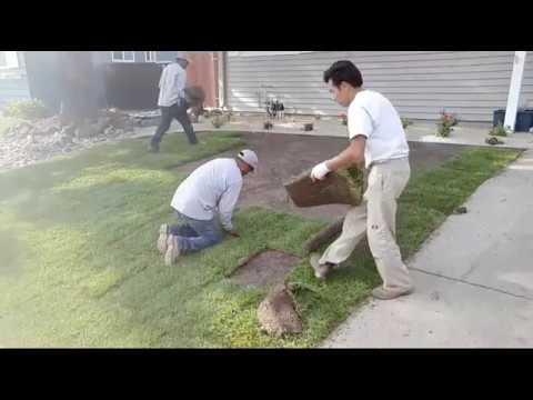 New Lawn Installation In Walnut Creek, CA