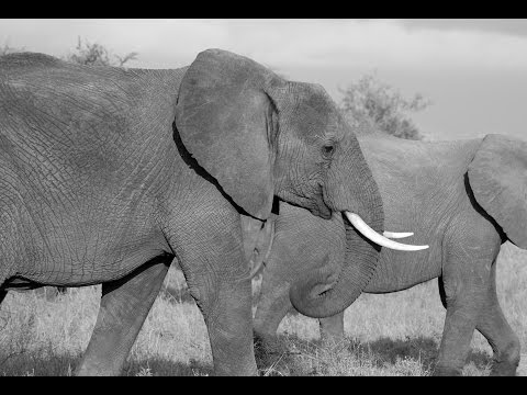 Combating Wildlife Trafficking in Mozambique & South Africa