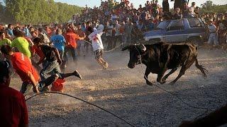 Супер коррида, Португалия. Быки атакуют.(Супер коррида видео, Португалия. Быки атакуют. Бык прикреплён к длинной веревке, возможно, чтобы тянуть..., 2014-12-09T17:17:57.000Z)