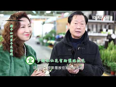 2019《鷹明天下》EP 1: 豬年如何用年花搶運?Fengshui with Master Eagle Wong 【天下衛視官方頻道 Sky Link TV YouTube Channel】