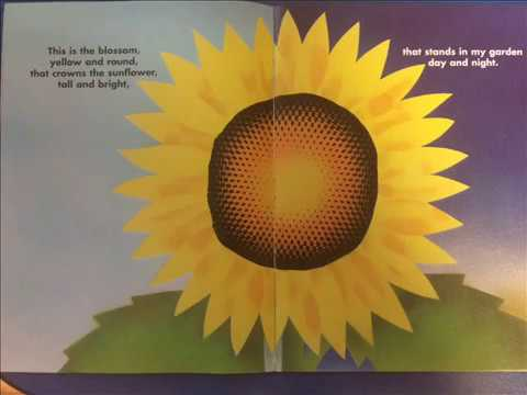 This is the SUNFLOWER - Stories for kids