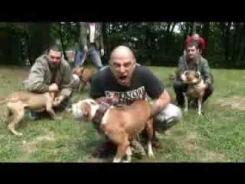 Serbian Skinheads