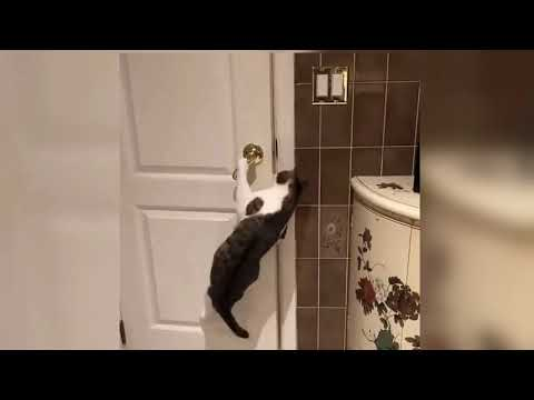 47 Days Of Quarantine Pets Want To Break Free Cutest Escapes Compilation