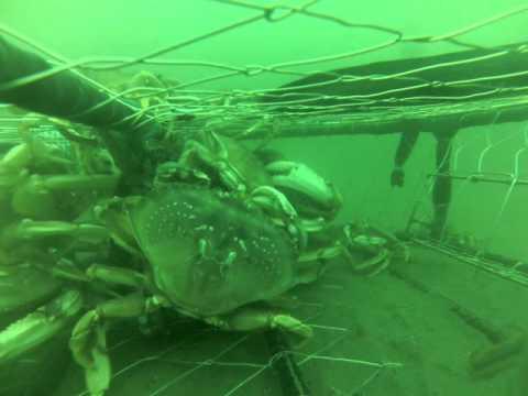 Ocean Crabbing Newport, Oregon (3/4)