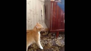 Мстительный кот /Cat's revenge