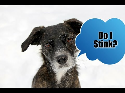 Why Does My Dog Smell?