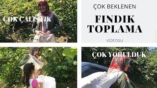 FINDIK TOPLAMAK :((:((