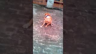 Dog takes round and round