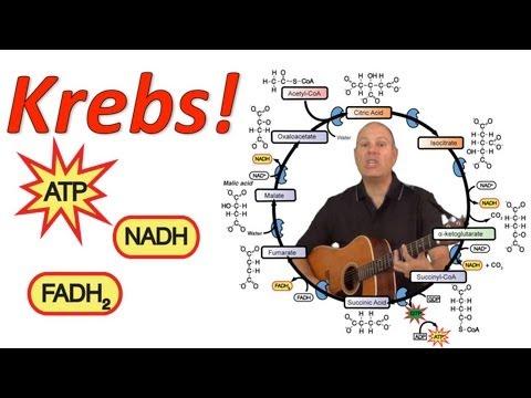 Krebs! (Mr. W's Krebs Cycle Song)