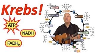 Krebs! (Mr. W's Krebs Cycle Song)