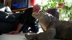 Cet herpétologiste vit avec deux alligators dans son salon