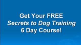 Dog Training - Dog Obedience - Free Secrets To Dog Training 6 Day Course!