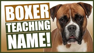 PUPPY TRAINING! Teaching Your BOXER Puppy Their Name