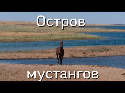 Ростовская область. Остров мустангов