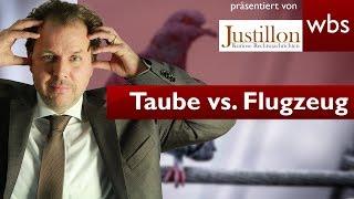 Haften Taubenhalter für Millionenschäden an Flugzeugen? | RA Solmecke und Justillon