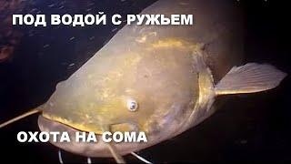 ПОД ВОДОЙ С РУЖЬЕМ СОМ Подводная охота на сома