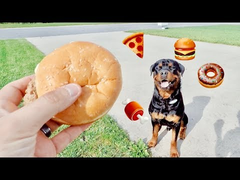 Throwing food at rottweiler, Dog cheese challenge |26