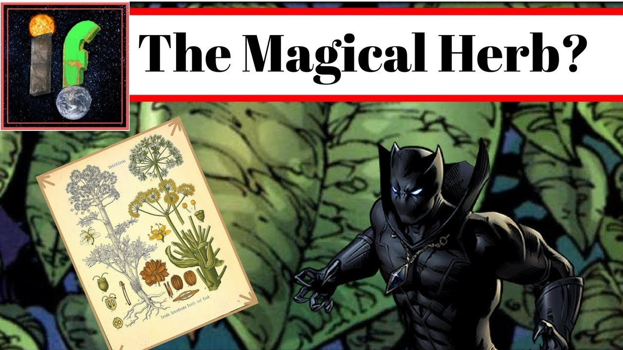 The magical herb Silphium 'IF' its forever lost?