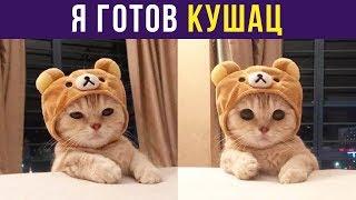 Приколы с котами. Я готов КУШАЦ | Мемозг #125