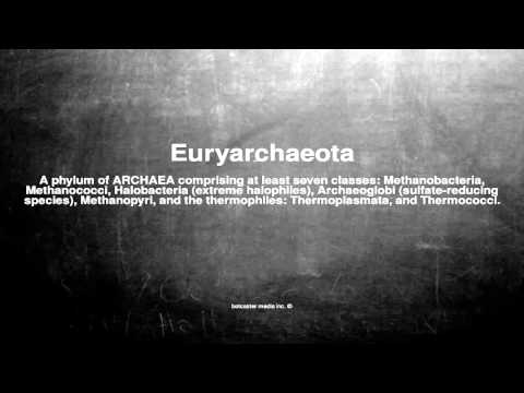 Medical vocabulary: What does Euryarchaeota mean