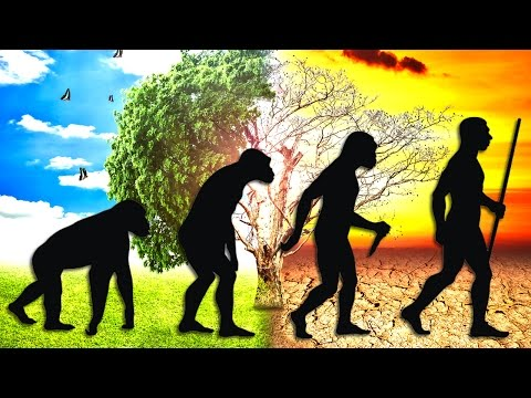 How Man Evolved To Cause A New Mass Extinction