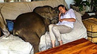 У этой женщины дома живет настоящий слон