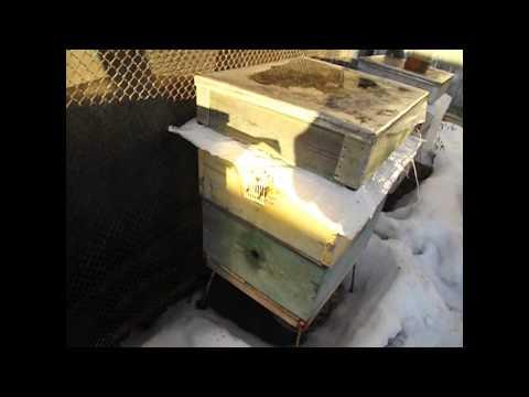 Можно ли мед при температуре? - elHow
