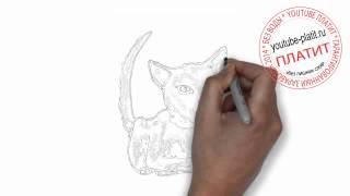 Как нарисовать кота карандашом(Как нарисовать кота поэтапно простым карандашом за короткий промежуток времени. Видео рассказывает о том,..., 2014-06-27T06:36:12.000Z)