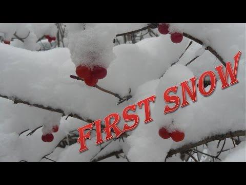 Первый день зимы. #Снегопад. Фото природы
