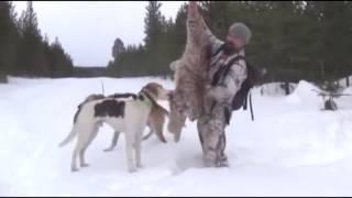 Охота на рысь в Швеции  Фильм 3
