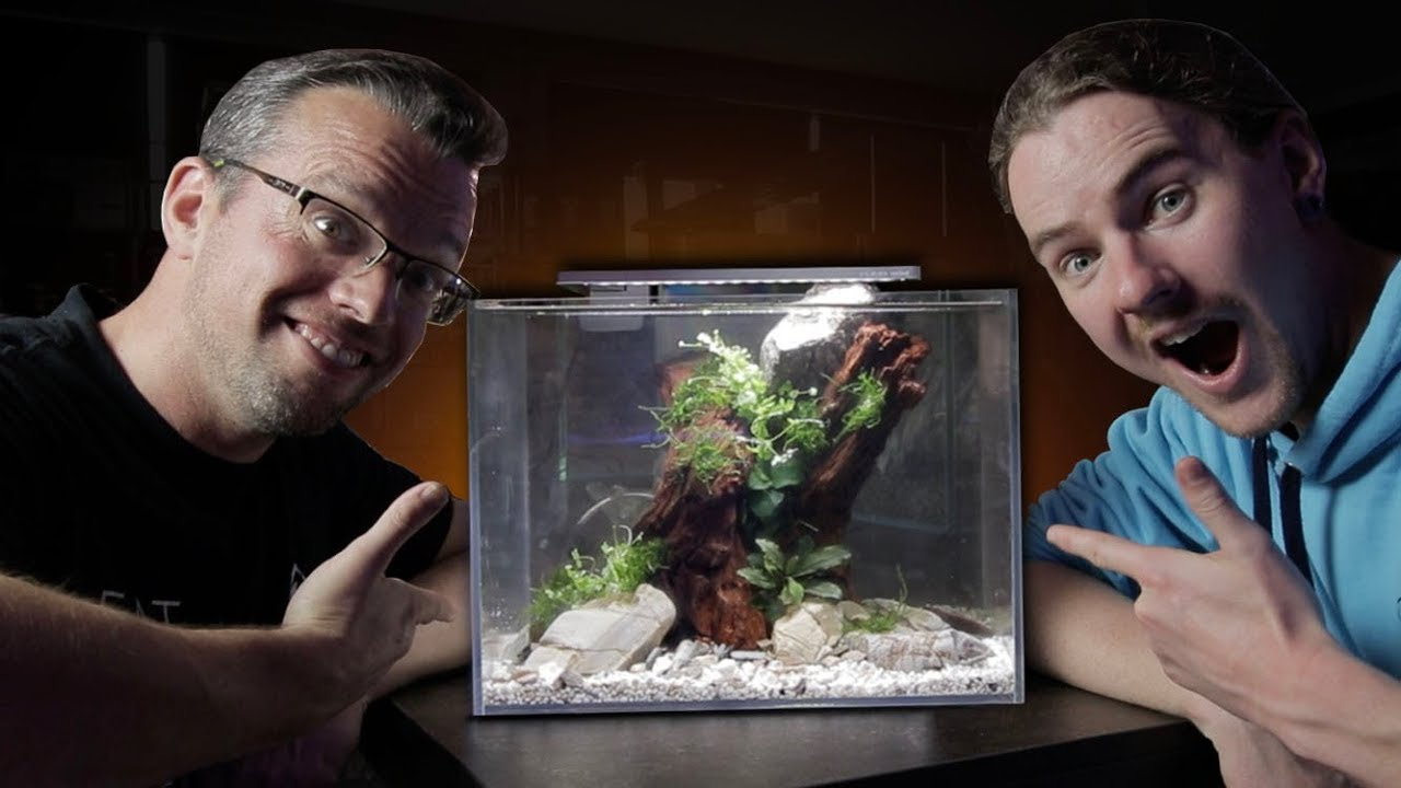 Shrimp Aquascape With George Farmer - Part 1 - YouTube