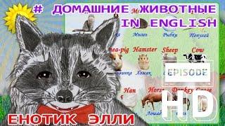 Домашние животные. In english. Енотик Элли.