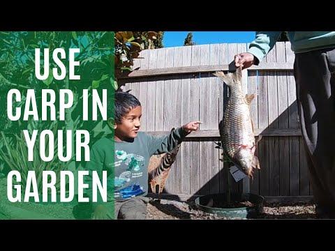 Carp Fishing (Garden Fertiliser) @ Canberra, ACT