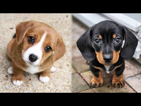 😍 Cute Puppies Doing Funny Things 2021 😍 #2 Cutest dogs