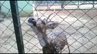 mysore zoo-one of the biggest zoo in india