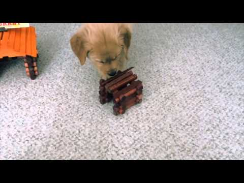 Puppy Destroys Small Town