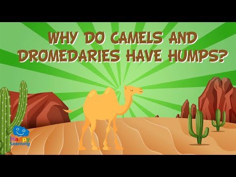 why-do-camels-and-dromedaries-have-humps?-|-educational-videos-for-kids