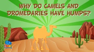 Why do Camels and Dromedaries have humps? | Educational Videos for Kids