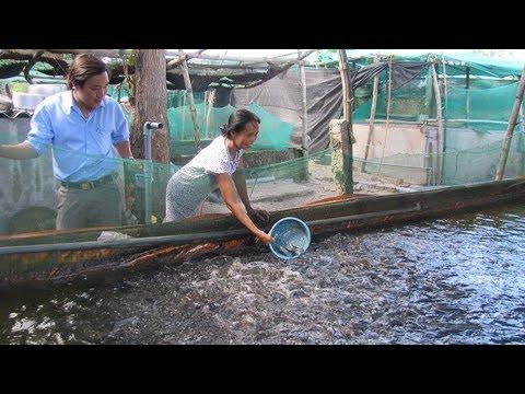 Cách nuôi cá trê trong bể xi măng – Mô hình nuôi cá trê tại Phú Yên