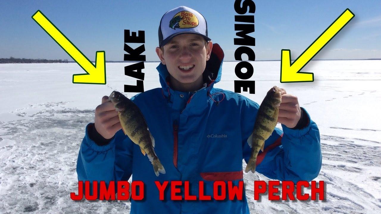 Ice fishing lake simcoe cooks bay jumbo perch youtube for Lake simcoe fishing report