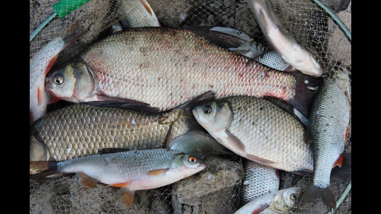 рыбалка в россии на южной