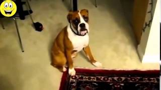 Funny Dogs Scared of Farts   Funny Videos Compilation 2015