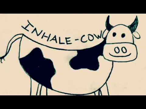 mindful cat  cow for all ages  youtube