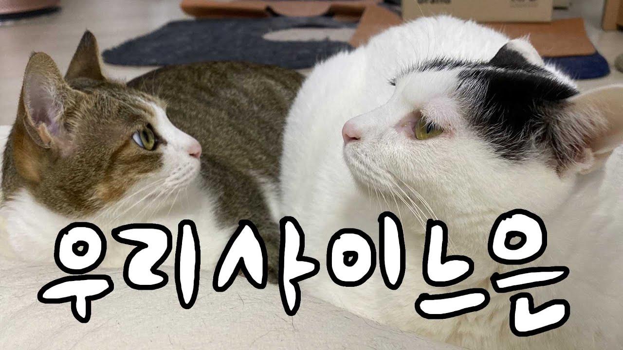 매일 치고박고 싸우는 고양이들, 그래서 너네 대체 무슨 사인데