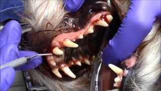 Professional Dental Cleaning For Your Pet!
