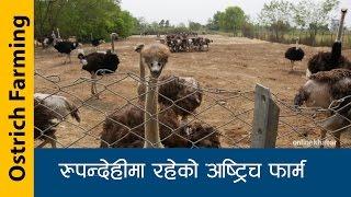 Ostrich Farm in Nepal