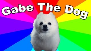 What is Gabe the dog? The History & Origin Of Bork Remixes And Gabe The Dog Memes