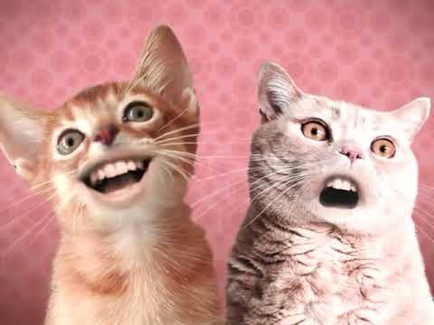 Singing Cats / Numa Numa Cat [10 hours]
