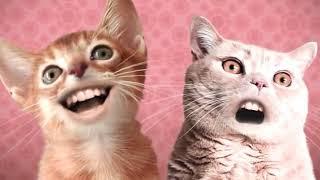 Singing Cats / Numa Numa Cat [10 hours]