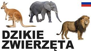 Yрок польского языка - Дикие животные 1 (Dzikie zwierzęta)